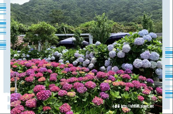 108.5.30.(166)竹子湖-花谷繡球花園.JPG