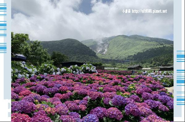 108.5.30.(190)竹子湖-花谷繡球花園.JPG