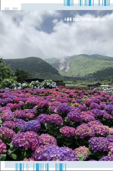 108.5.30.(191)竹子湖-花谷繡球花園.JPG