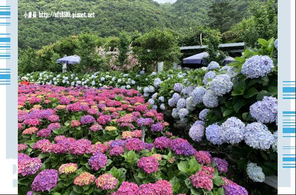108.5.30.(162)竹子湖-花谷繡球花園.JPG