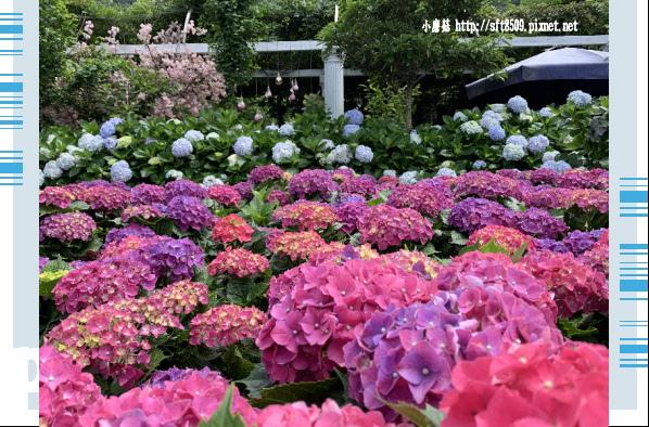 108.5.30.(180)竹子湖-花谷繡球花園.JPG