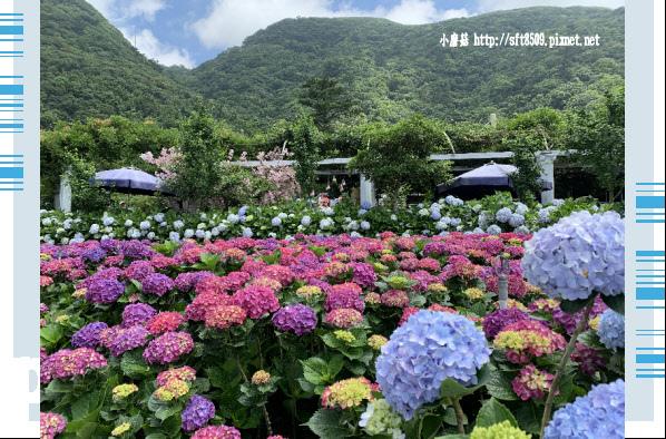 108.5.30.(168)竹子湖-花谷繡球花園.JPG