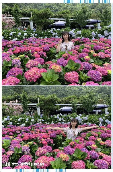 108.5.30.(170)竹子湖-花谷繡球花園.JPG