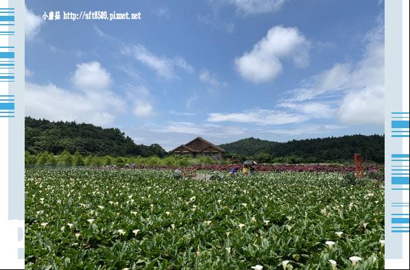108.5.30.(184)竹子湖-花谷繡球花園.JPG