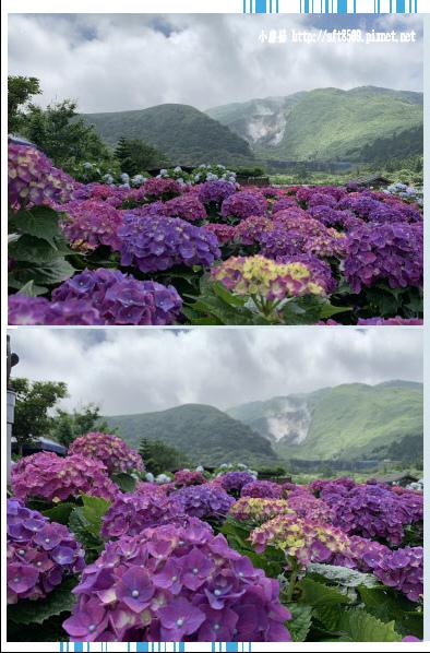 108.5.30.(187)竹子湖-花谷繡球花園.JPG