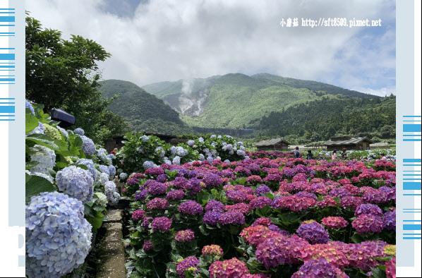 108.5.30.(193)竹子湖-花谷繡球花園.JPG