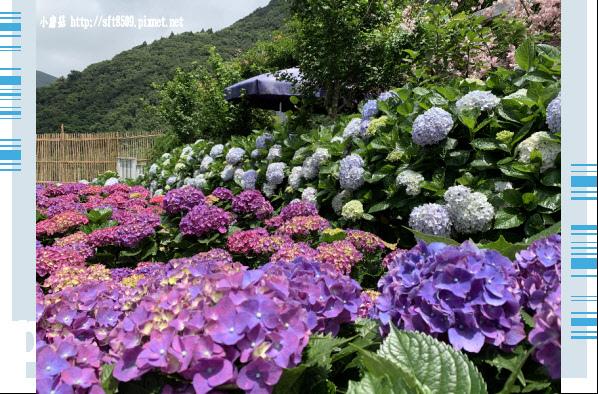 108.5.30.(203)竹子湖-花谷繡球花園.JPG