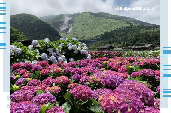 108.5.30.(212)竹子湖-花谷繡球花園.JPG