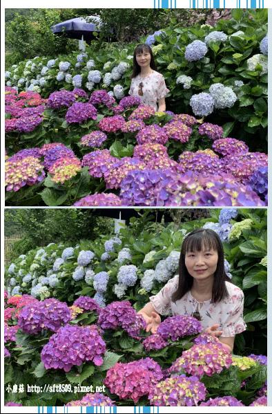 108.5.30.(205)竹子湖-花谷繡球花園.JPG