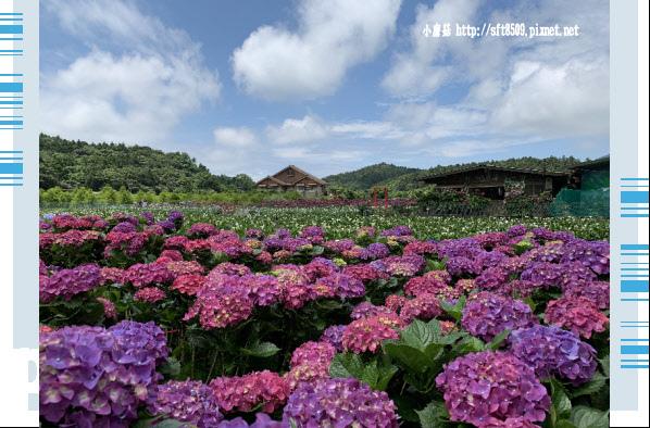 108.5.30.(222)竹子湖-花谷繡球花園.JPG