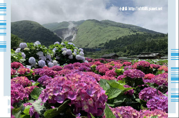 108.5.30.(214)竹子湖-花谷繡球花園.JPG