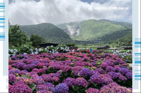 108.5.30.(186)竹子湖-花谷繡球花園.JPG