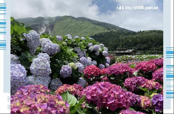 108.5.30.(217)竹子湖-花谷繡球花園.JPG
