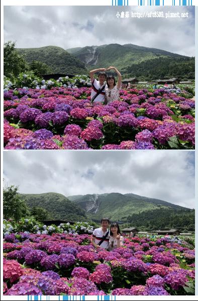 108.5.30.(238)竹子湖-花谷繡球花園.JPG