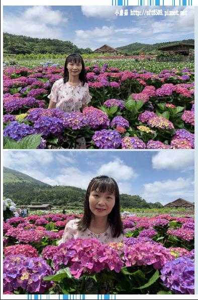 108.5.30.(225)竹子湖-花谷繡球花園.JPG