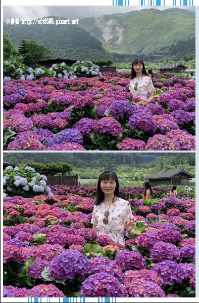 108.5.30.(233)竹子湖-花谷繡球花園.JPG