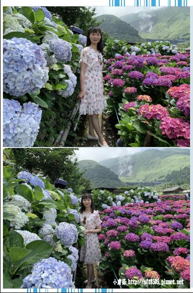 108.5.30.(195)竹子湖-花谷繡球花園.JPG