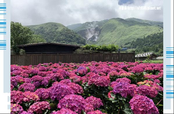 108.5.30.(241)竹子湖-花谷繡球花園.JPG