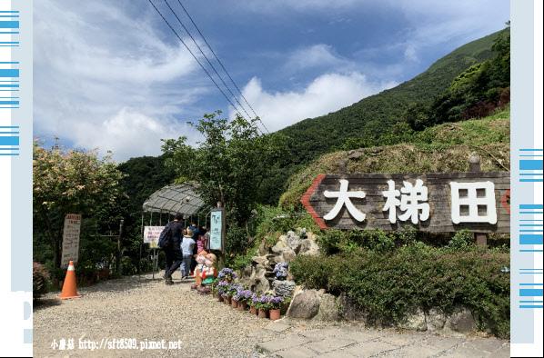 108.6.7.(2)竹子湖-大梯田生態農園.JPG