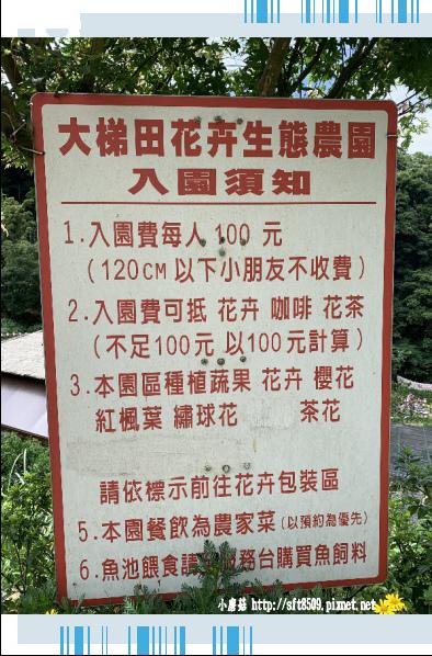 108.6.7.(4)竹子湖-大梯田生態農園.JPG