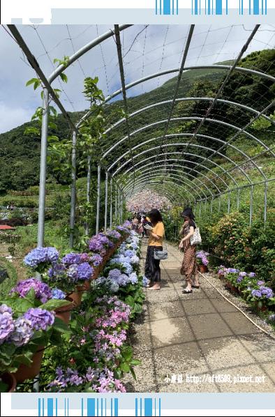 108.6.7.(6)竹子湖-大梯田生態農園.JPG
