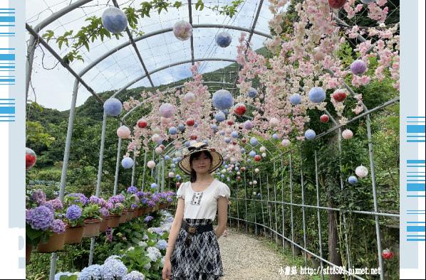 108.6.7.(10)竹子湖-大梯田生態農園.JPG
