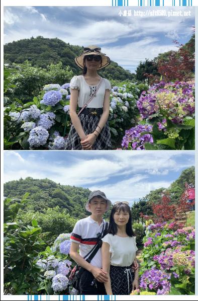108.6.7.(24)竹子湖-大梯田生態農園.JPG