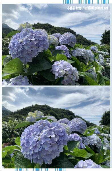 108.6.7.(26)竹子湖-大梯田生態農園.JPG