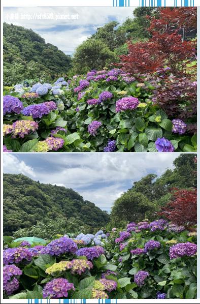 108.6.7.(30)竹子湖-大梯田生態農園.JPG