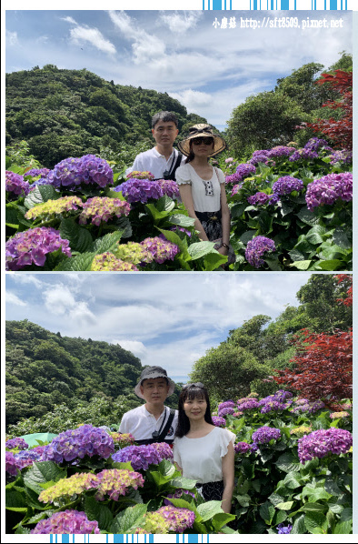 108.6.7.(34)竹子湖-大梯田生態農園.JPG
