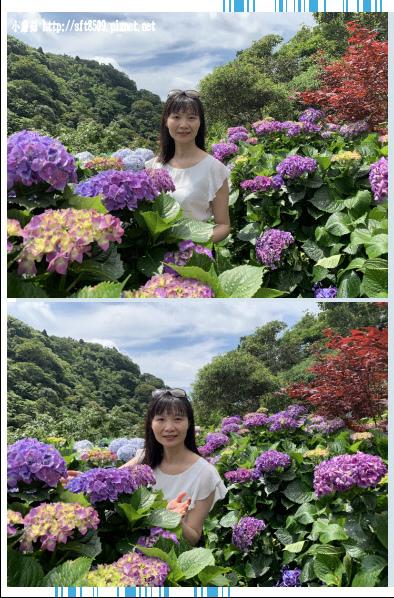 108.6.7.(41)竹子湖-大梯田生態農園.JPG