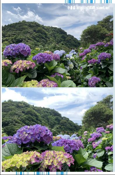 108.6.7.(44)竹子湖-大梯田生態農園.JPG