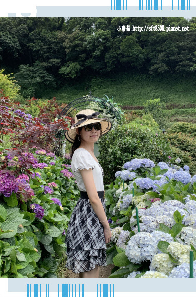 108.6.7.(50)竹子湖-大梯田生態農園.JPG