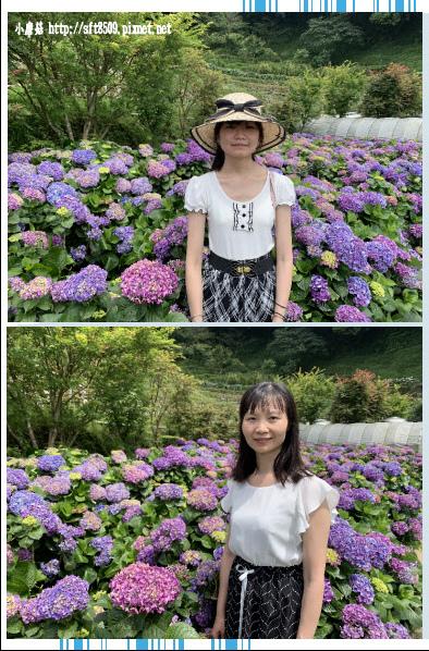 108.6.7.(59)竹子湖-大梯田生態農園.JPG