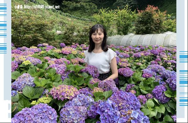 108.6.7.(70)竹子湖-大梯田生態農園.JPG