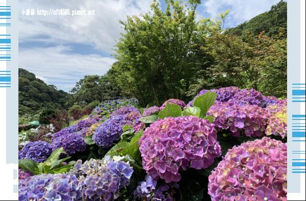108.6.7.(72)竹子湖-大梯田生態農園.JPG