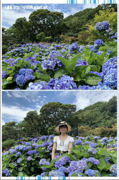 108.6.7.(75)竹子湖-大梯田生態農園.JPG