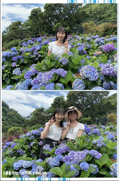 108.6.7.(81)竹子湖-大梯田生態農園.JPG