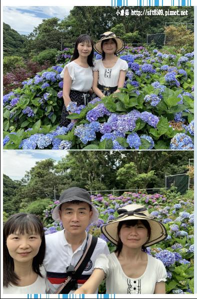 108.6.7.(82)竹子湖-大梯田生態農園.JPG