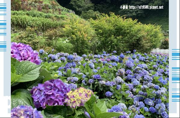 108.6.7.(86)竹子湖-大梯田生態農園.JPG