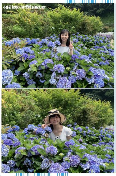 108.6.7.(88)竹子湖-大梯田生態農園.JPG