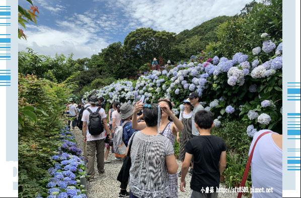 108.6.7.(96)竹子湖-大梯田生態農園.JPG