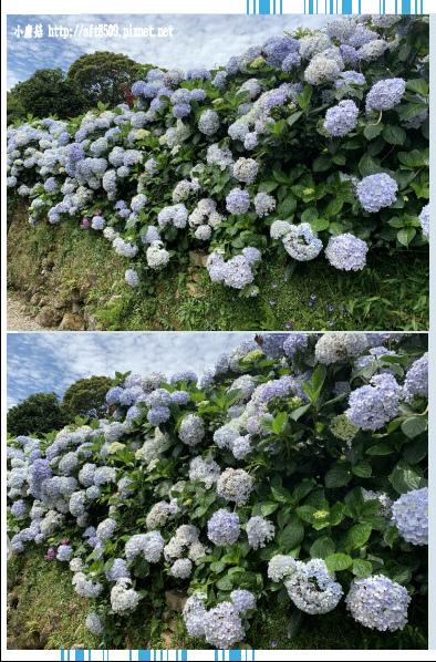 108.6.7.(97)竹子湖-大梯田生態農園.JPG
