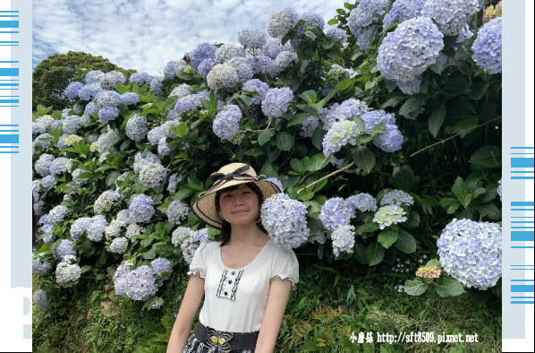 108.6.7.(109)竹子湖-大梯田生態農園.JPG