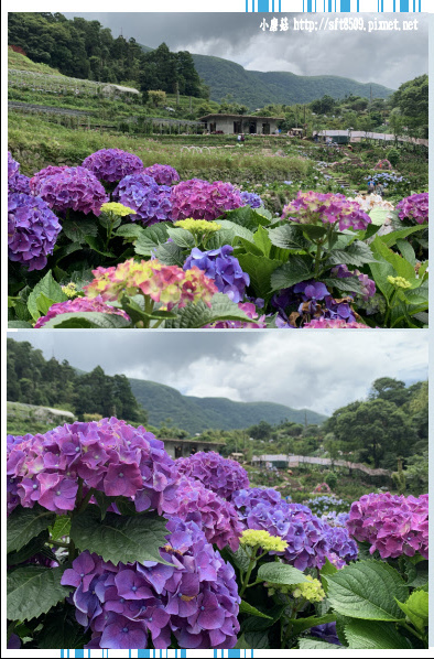 108.6.7.(124)竹子湖-大梯田生態農園.JPG
