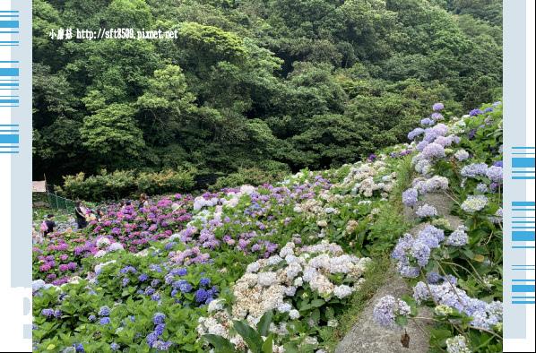 108.6.7.(131)竹子湖-大梯田生態農園.JPG