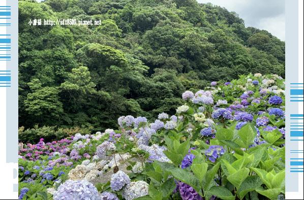 108.6.7.(132)竹子湖-大梯田生態農園.JPG