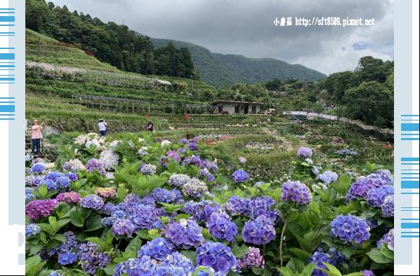108.6.7.(135)竹子湖-大梯田生態農園.JPG