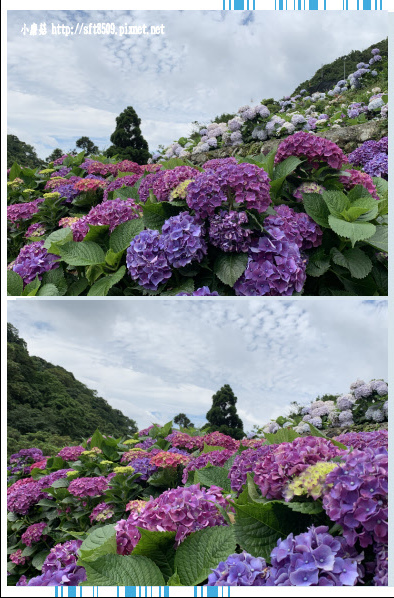 108.6.7.(142)竹子湖-大梯田生態農園.JPG