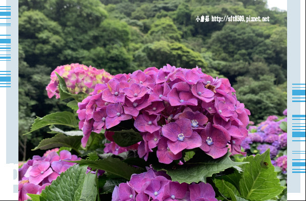 108.6.7.(147竹子湖-大梯田生態農園.JPG